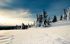 Обои снег, елки, зима