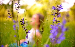 Картинка зелень, трава, цветы, силуэт