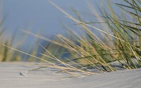Картинка трава, Песок