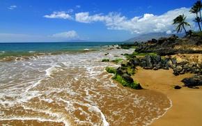 Картинка природа, тропики, камни, пальмы, океан, берег, побережье