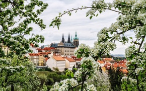 Картинка цветы, ветки, город, весна, Прага, Чехия