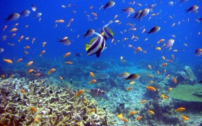 Картинка рыбы, кораллы, подводный мир, reef and fish