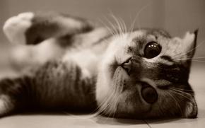 Картинка кошка, котенок, животное, kitten, cat, animal