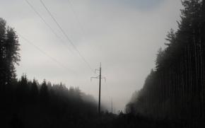 Картинка лес, туман, утро, мгла, лэп