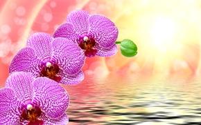 Обои цветы, лучи, фон, фиолетовые, крупным планом, боке, вода, рябь, солнце, блики, орхидеи, капли