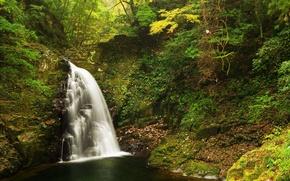 Картинка лес, листья, деревья, парк, камни, водопад, мох, кусты