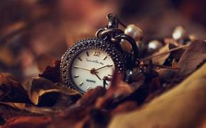 Картинка осень, листья, стрелки, часы, циферблат, подвеска