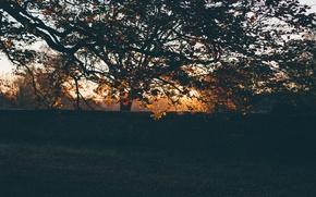 Картинка осень, листья, закат, дерево