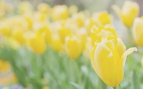 Картинка макро, цветы, желтый, яркий, природа, фон, обои, растение, цветочки, wallpapers