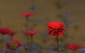 Картинка цветы, flowers, macro
