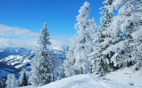 Картинка зима, лес, снег, природа, австрия