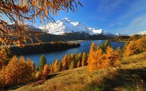 Обои швейцария, озеро, silsersee, лес, горы