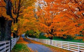 Обои nature, trees, mountain, leaves, colorful, road, path, autumn, fall