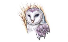 Картинка ветки, сова, птица, живопись, owl