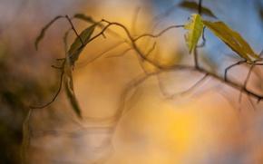 Картинка листья, макро, деревья, желтый, фон, дерево, обои, размытие, ветка, листик, wallpaper, листочки, широкоформатные, background, боке, …