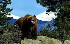 Картинка природа, медведь, Животные, Бурый