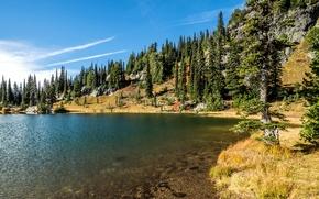 Картинка деревья, озеро, камни, берег, США, Rocky Mountain National Park, Sheep Lake