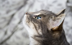Картинка глаза, кот, взгляд, морда, фон