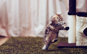 Картинка котенок, прыжок, Daisy, © Ben Torode
