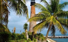 Обои Маяк, Флорида, Пальмы