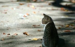 Обои асфальт, котенок, осень, Листья