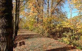 Картинка листва, Осень, дорожка, autumn, leaves, path, fall