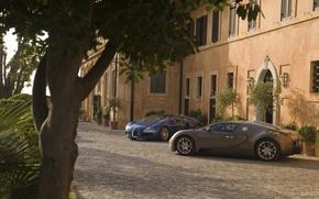 Обои Дерево, Bugatti Veyron, Дом, Свет