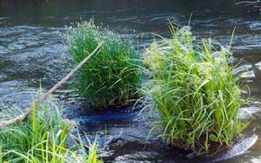 Картинка природа, пруд, река, речка