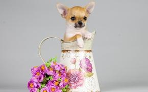 Картинка цветы, собака, букет, щенок, кувшин