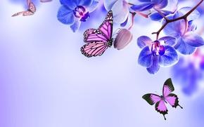 Картинка цветы, flowers, butterflies, orchid, blue, бабочки, орхидея, beautiful