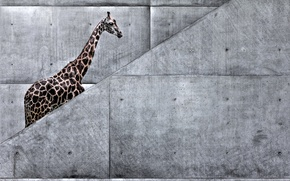 Картинка животные, природа, метро, арт, жираф, лестница, африка, жираф идет