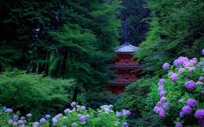 Обои цветы, парк, деревья, кусты, Kyoto, Япония, гортензия, зелень, пагода