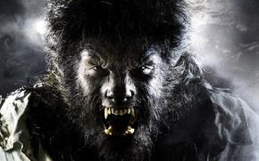 Обои Человек-Волк, Бенисио Дель Торо, The Wolfman