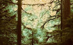 Обои деревья, чаща, Рисунок