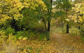 Картинка осень, листья, парк