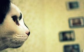 Обои кошка, взгляд, котэ, нос, морда, кот