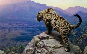 Картинка sky, jaguar, cats, moutains