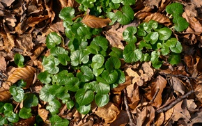 Картинка green, light, plant, Brown