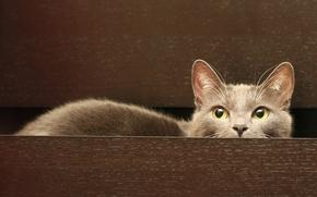 Картинка кошка, сидит, cat