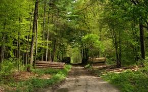 Обои Лес, дорога, брёвна