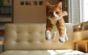 Картинка взгляд, дом, прыжок, Кот, рыжий