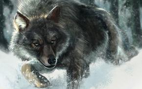 Картинка Рисунок, Снег, Волк, Животные
