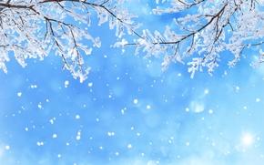 Обои блики, снег, голубое, зима, небо, ветки, снежинки