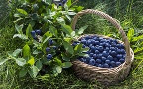 Обои ягоды, корзина, черника, fresh, blueberry, berries