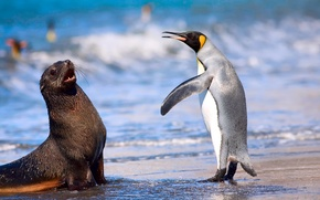 Картинка море, пляж, океан, королевский пингвин, кергеленский морской котик