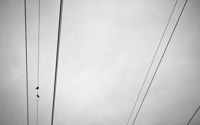 Картинка небо, птицы, провода, минимализм
