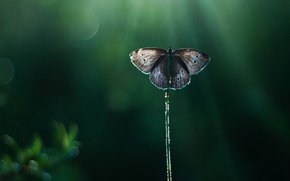 Картинка лучи, блики, фон, бабочка, тростинка