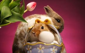 Картинка тюльпан, яйца, кролики, корзинка