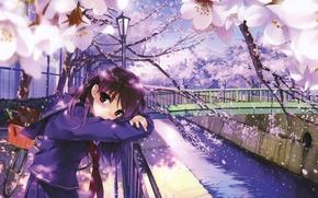 Картинка мост, велосипед, река, весна, ограда, лепестки, Япония, сакура, фонарь, школьница, цветение, art, Misaki Kurehito