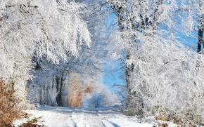 Картинка зима, дорога, лес, небо, снег, деревья